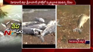 శ్రీరామ్ సాగర్ ప్రాజెక్ట్ లో మృత్యువాత పడుతున్న చేపలు || Nizamabad || NTV - NTVTELUGUHD