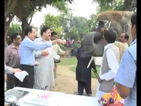 World Elephant Day & Suzi Birthday Ceremony In Lahore Zoo Pkg By City42