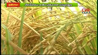 Special Focus on Srikakulam Farming | to Increase Yield of Rice Crop | CVR News - CVRNEWSOFFICIAL