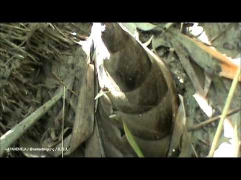 Unikamu Com Rebung Tunas Bambu Makanan Unik Asia