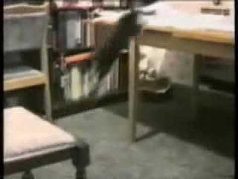 Возможно, это самое смешное видео с кошками, которое вы видели…