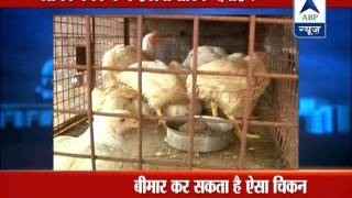 ABP LIVE: Study finds antibiotic residues in poultry - ABPNEWSTV