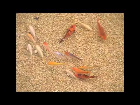 Peixe e Vida - Aquários e Lagos Ornamentais | Shopping Atlântico Bal. Camboriú/SC