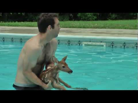 Baby Deer trapped in Pool