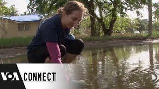 Citizen Scientists and Rising Sea Levels - VOAVIDEO