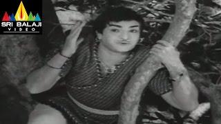 Alibaba 40 Dongalu Movie NTR Raberry Scene || NTR, Jaya Lalitha - SRIBALAJIMOVIES