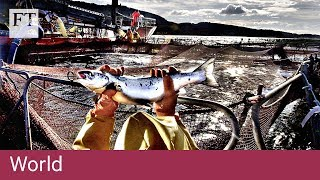 Brexit and the future of British fishing - FINANCIALTIMESVIDEOS