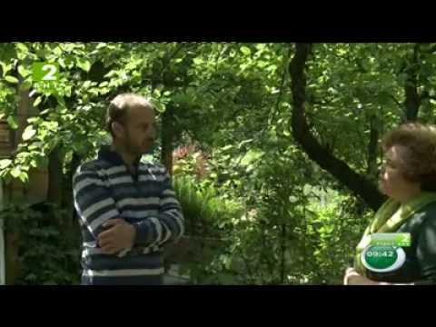 Магия на цветята: Аристократи в градината - род Рододендрони.