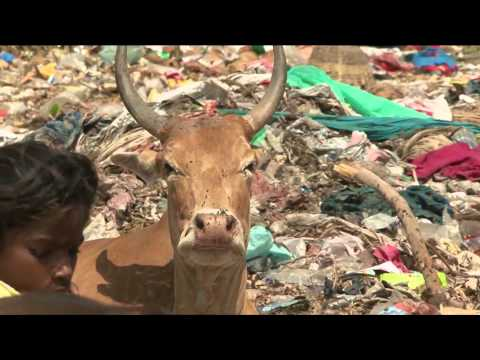 The Plastic Cow 2012 documentary movie, default video feature image, click play to watch stream online