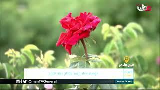 ربط مباشر من نيابة الجبل الأخضر بولاية نزوى بمحافظة الداخلية للحديث حول موسم حصاد الورد وإنتاج دهن ا