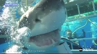 Great White Shark Breaks Into Cage [RAW VIDEO] - ABCNEWS
