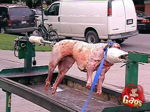 Sheep Roast Prank