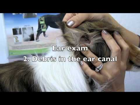 Physical exam at a veterinary office.