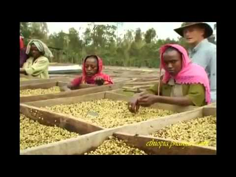 The Ethiopian Coffee Process; from the Farm to Your Local Cafe