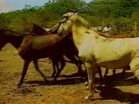 Jornal Nacional Roraima, Cavalos selvagens