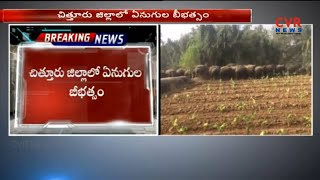 Elephant  Hulchul in Chittoor district | CVR News - CVRNEWSOFFICIAL
