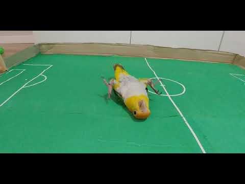: Almost like Neymar...... -