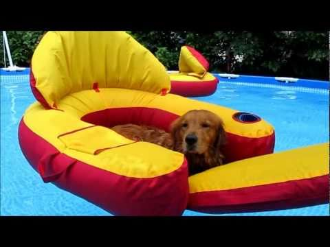 Check this Out!!  Golden Retriever Dogs in Pool!!  To Funny!!