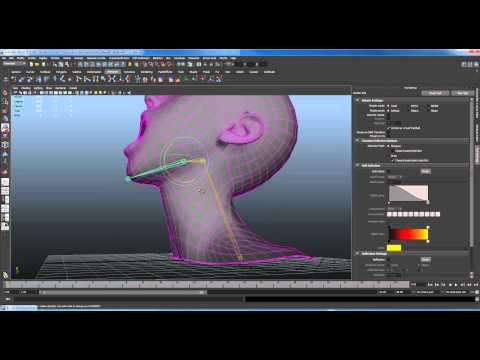 How to Paint Skin Weights in Maya 2011