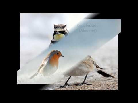 Κελαϊδίσματα πουλιών