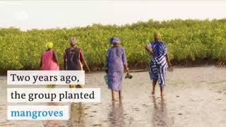 Fighting erosion in Senegal | DW English - DEUTSCHEWELLEENGLISH