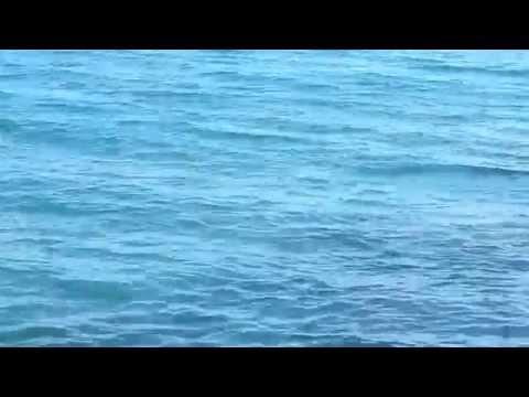 ΨΑΡΕΜΑ ΛΙΤΣΑΣ , HEAVY CASTING (ΚΥΠΡΟΣ)