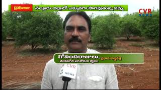 Lemon trees cultivation techniques by Scientist Govindarajulu | CVR News - CVRNEWSOFFICIAL