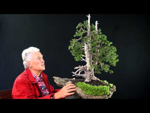 INTERNATIONAL BONSAI ACADEMY with Walter Pall 2013 - Case Study 6/ Picea abies yamadori