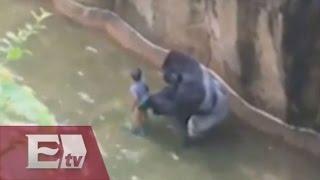 ¿Matar al gorila era la única opción?