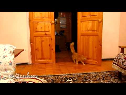 Super Mario scares the s**t out of this cat