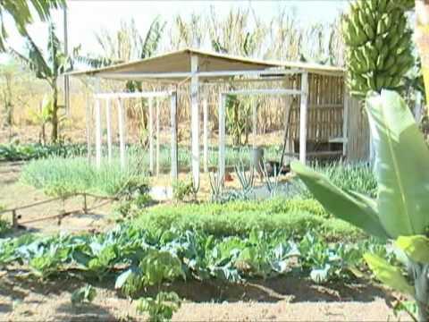 3 - Galinheiro - Produção Agroecológica Sustentável - PAIS