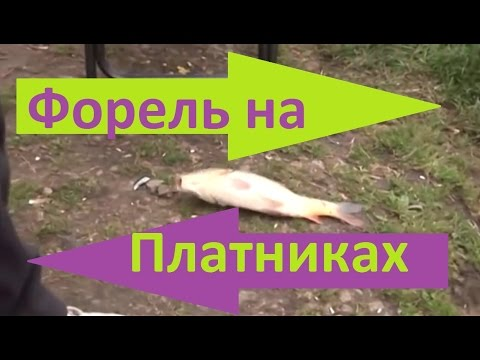 ловля форели на фидер весной видео
