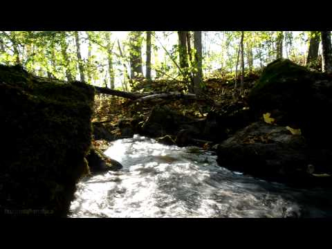 Forest Stream Relaxing Natural and Peaceful Music