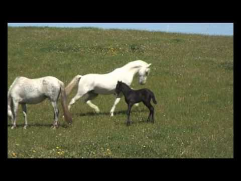 Stallion gets reunited with his mares and foal