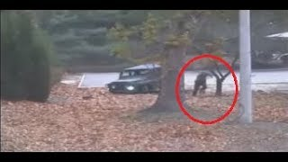 N.Korean defector making run for freedom shot by comrades (CCTV) - RUSSIATODAY