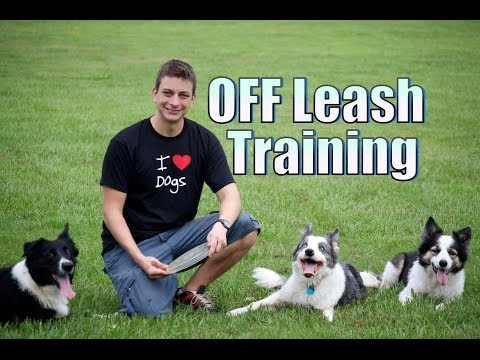 how to train a dog to walk without pulling