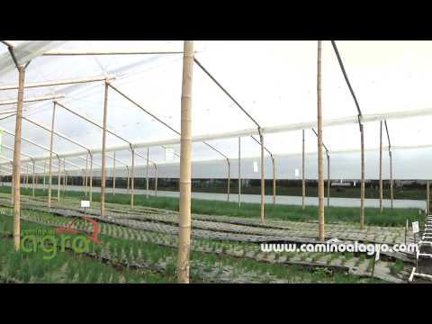 Polietileno o plastico inteligente para invernaderos