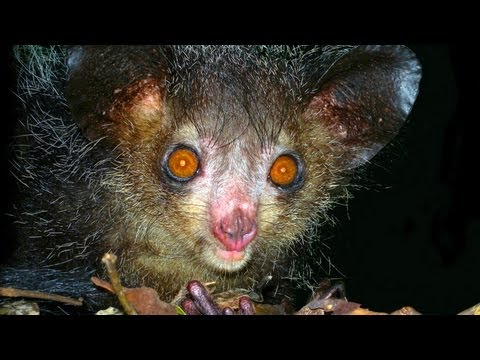 10 Animals You Didn't Know Existed