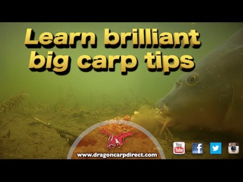 Brilliant carp tips and action