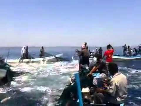 صيد أسماك غريب في اليمن