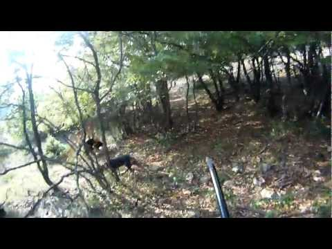 κυνηγι λαγος dabi 2011 HARE HUNTING