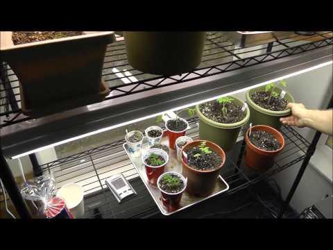 Indoor Gardening Grow Room Tour