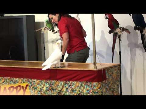 Happy Birds la Invierea Domnului 1
