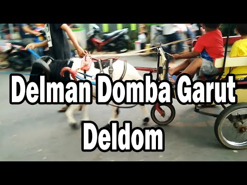 Delman Domba DELDOM Garut
