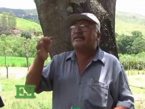 Pasto Maralfalfa - Seminario Nacional - Parte 2 [Ganadería]