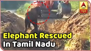 Viral Desh: Calf rescued from a pit after six hours - ABPNEWSTV