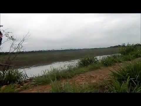 caceria de patos 2012 villanueva - casanare.wmv