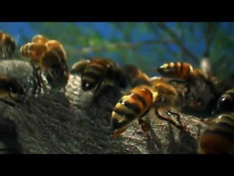 Natureza em HD e Câmera Lenta (Nature Beauty in HD and Slow Motion)
