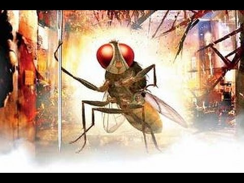Rajamouli's Eega flies to 3 International Film Festivals -TV5