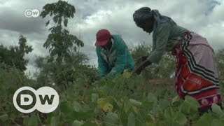 Drought and corruption fuel corn crisis in Kenya | DW English - DEUTSCHEWELLEENGLISH